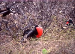 Galapagos Island - Luxury Land Based Tours