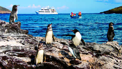 Christmas in Ecuador & Galapagos 2018 - 5 day cruise on the Beluga Yacht