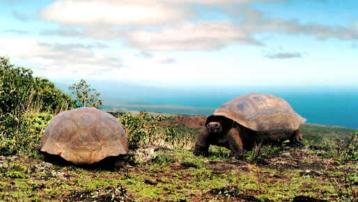 Galapagos 8 days cruise
