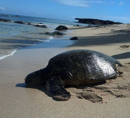 Galapagos Tours Christmas In Galapagos 2018 8 Day